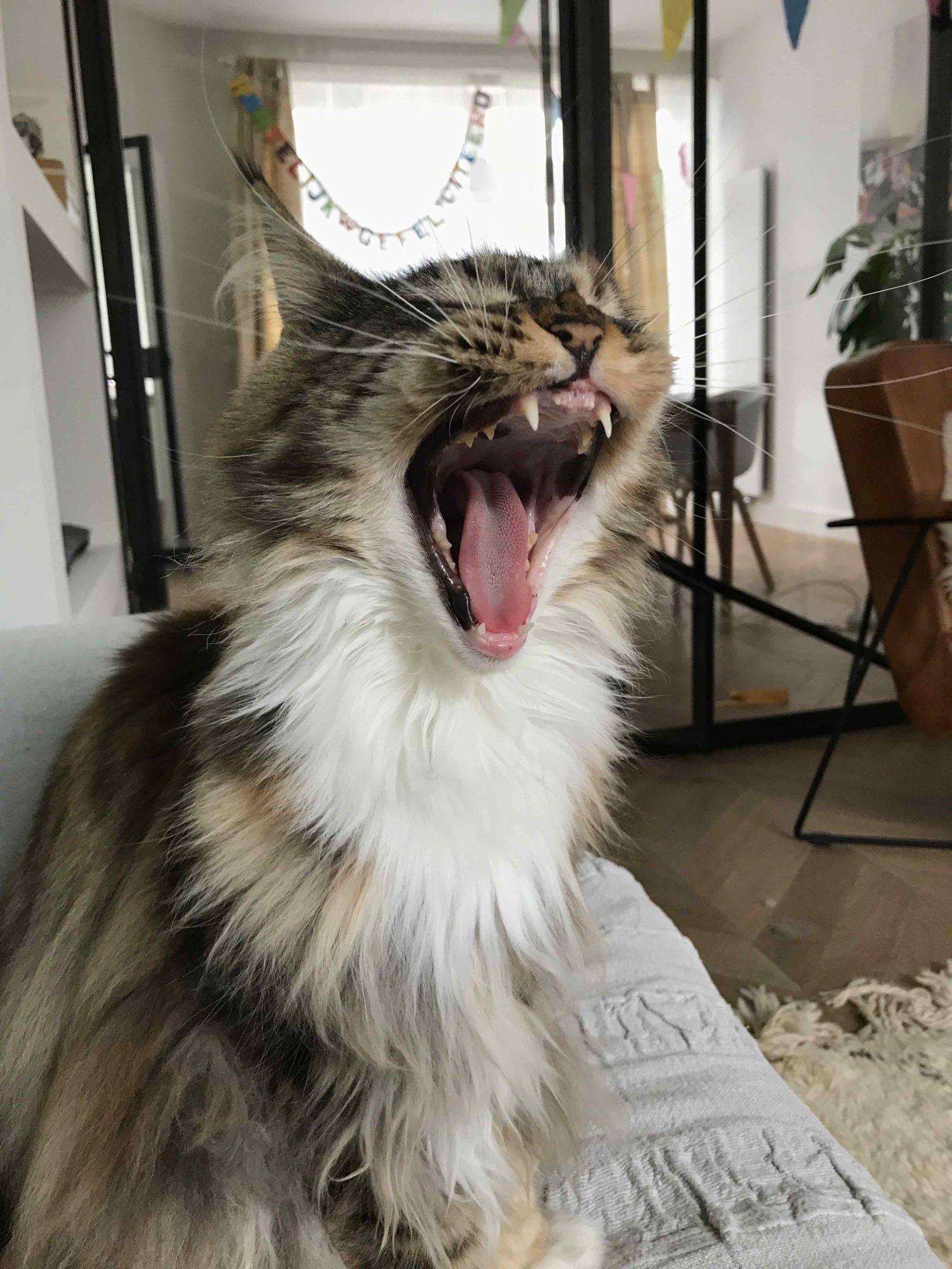 kat bijt