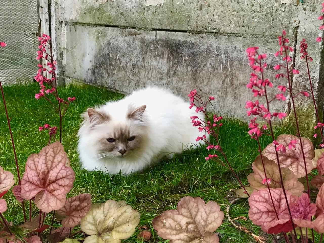 kat in tuin houden