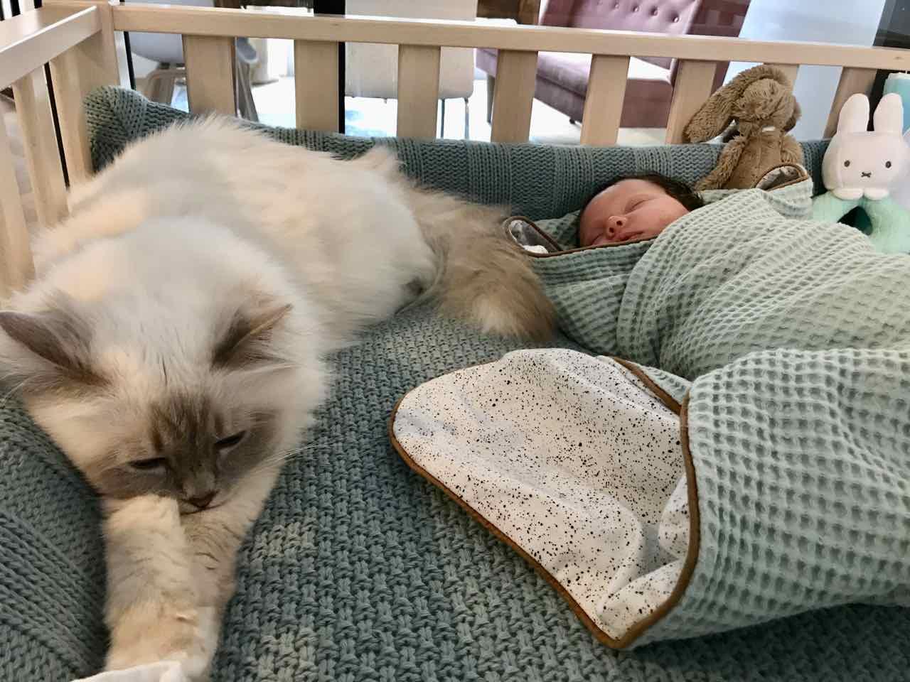 kat en baby